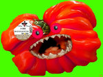 Monsanto Tomato